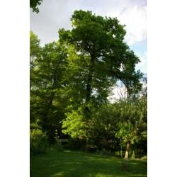 Plantation Agroforesterie- Idf