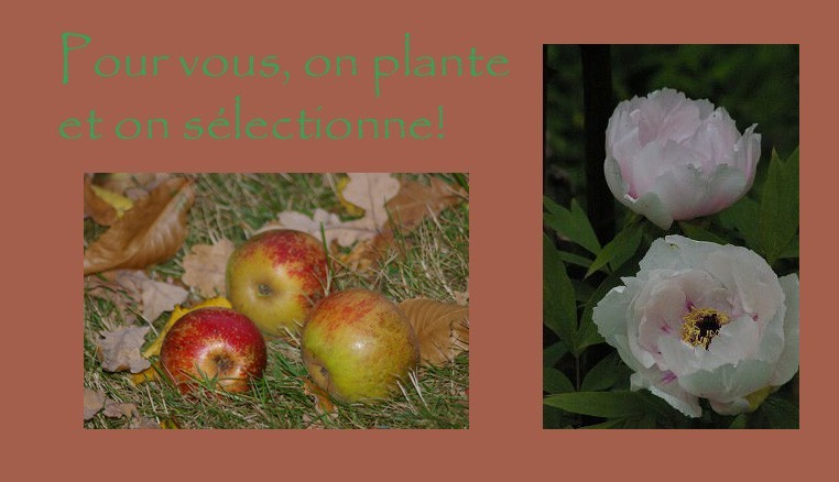 plantations et sélections de collections de plantes