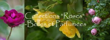 """collection de rosiers, de """"belles et parfumées roses"""""""