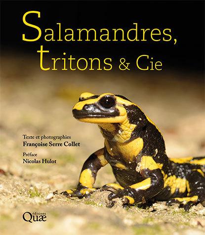 Salamandres, tritons & cie – édition Quae