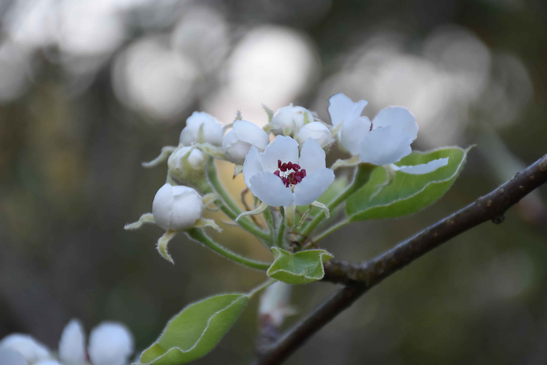 nouvelles du jardin et du verger- avril 2021